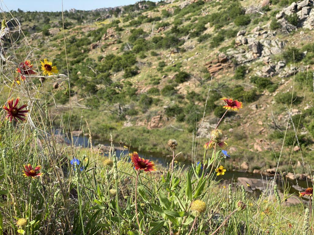 Wildflowers in full bloom late spring - Wichita Mountains Wildlife Refuge - by Teri Simonton